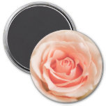 Peach Pink Rose Background Customised Template 7.5 Cm Round Magnet