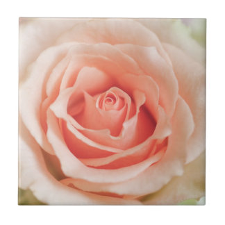 Peach Pink Rose Background Customized Template Tile