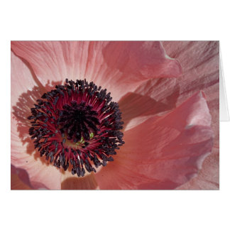 Peach Poppy Blank Notecard