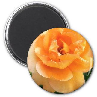 Peach Rose 3  Soft Focus 6 Cm Round Magnet