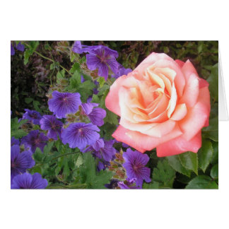 Peach Rose and Purple Geraniums Cards