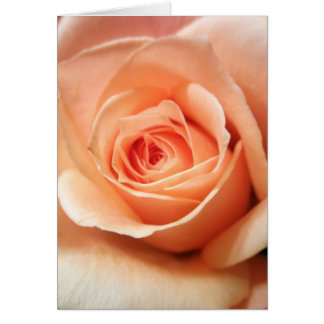 Peach Rose Apricot Roses Flowers Floral Photo Card