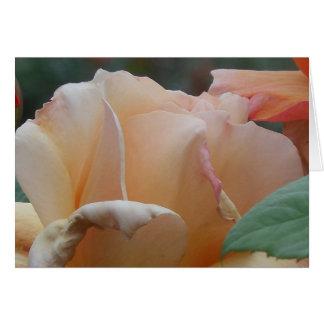 Peach Rose, Belfast Rose Garden Card