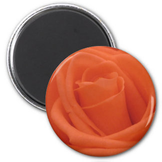 Peach Rose Floral Image - Standard Round Magnet