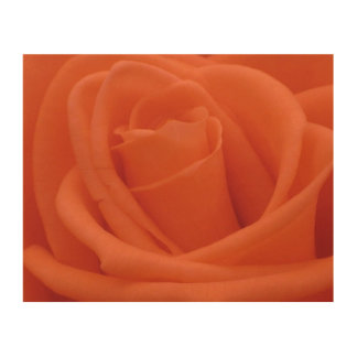 Peach Rose Floral Image - Wood Canvas