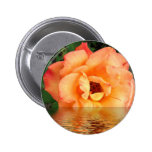 Peach Rose In Water Button