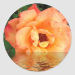 Peach Rose In Water Round Stickers