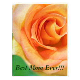 Peach Rose Mother's Day Postcard