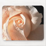 Peach Rose With Dew Mouse Pad