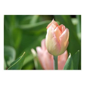 Peach Tulip - Chubby Business Cards