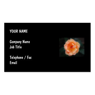 Peach - Yellow rose, on black. Pack Of Standard Business Cards