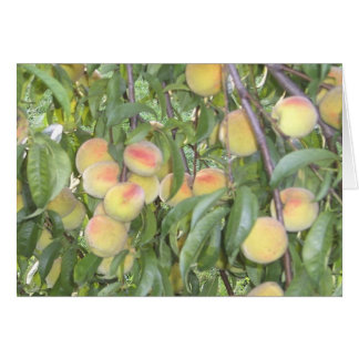 Peaches on the Tree Greeting Card