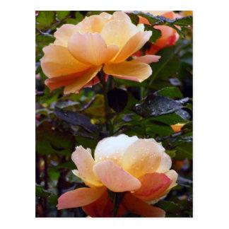 Peachy Keen Postcard