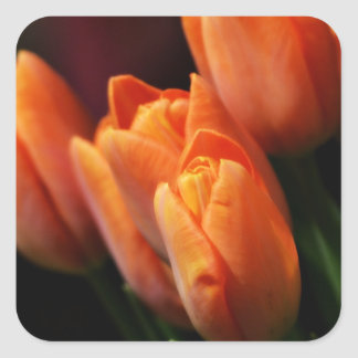 Peachy tulips for you square sticker