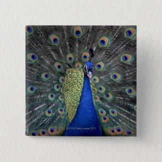 Peacock 15 Cm Square Badge