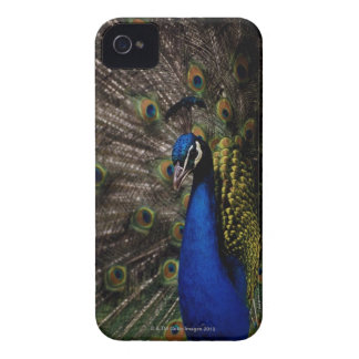 Peacock 2 Case-Mate iPhone 4 case