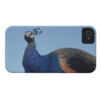 Peacock 2 iPhone 4 Case-Mate cases
