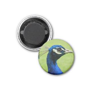 Peacock 3 Cm Round Magnet