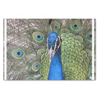peacock-3.jpg tissue paper
