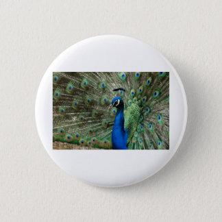 peacock 6 cm round badge