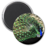 Peacock 6 Cm Round Magnet