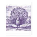Peacock, a vintage engraving postcards
