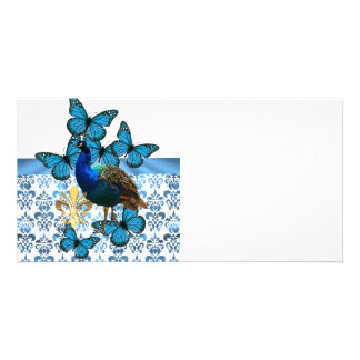 Peacock and blue butterflies photo cards