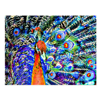 peacock and feathers orange artistic graphic postcard