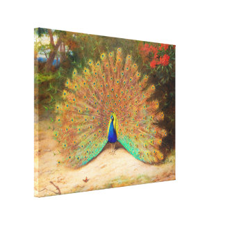 Peacock and Peacock Butterfly Gallery Wrapped Canvas
