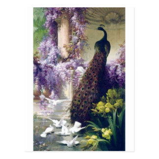 Peacock and white doves birds painting postcard