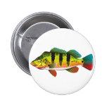 Peacock Bass bright Ocean Gamefish illustration 6 Cm Round Badge