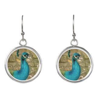 Peacock Beautiful Blue Bird Nature Photography Earrings