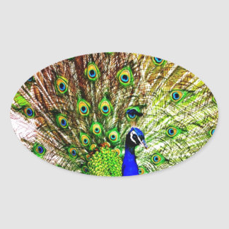 Peacock Beautiful Green Bird Animal Royal Luxury S Oval Sticker