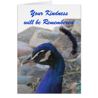 Peacock Beauty -  Sympathy Thank You Note Card