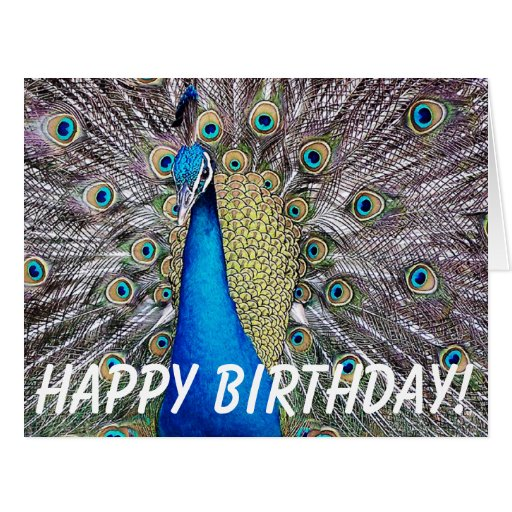 Peacock Bird Birthday Big Greeting Card