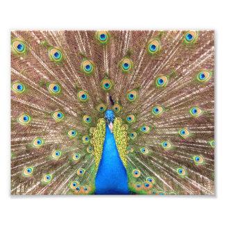 Peacock bird feathers beautiful photo