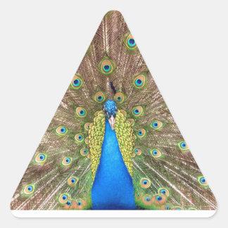 Peacock bird feathers beautiful photo stickers