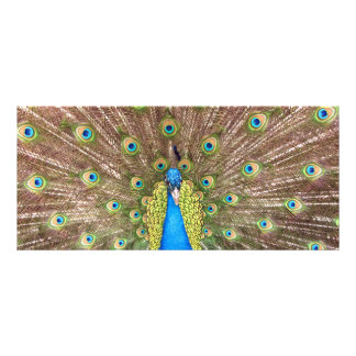 Peacock bird feathers photo custom name bookmark rack card