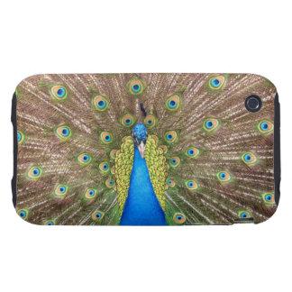 Peacock bird feathers photo iphone 3G case mate Tough iPhone 3 Cover
