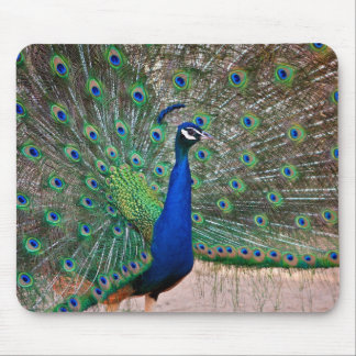 Peacock bird in full display mouse pad