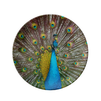 Peacock Bird with Royal Plumange on Display Porcelain Plate