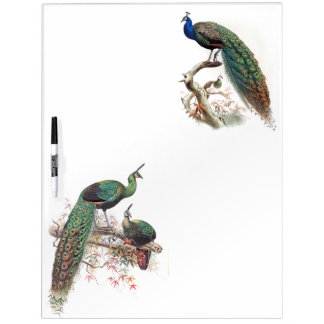 Peacock Birds Wildlife Animals Dry Erase Board