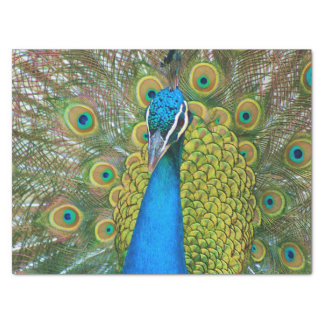 Peacock Blue Head with and Colorful Tail Feathers Tissue Paper