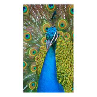Peacock Blue Head with and Colourful Tail Feathers Business Card