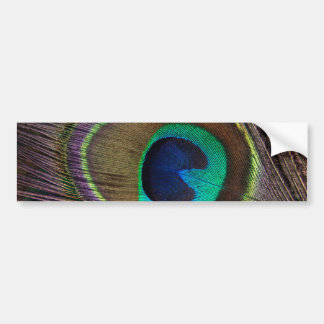 Peacock Bumper Sticker