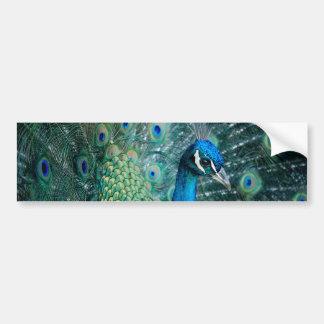 Peacock, bumper sticker