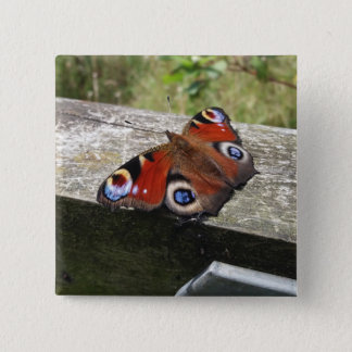 Peacock Butterfly 15 Cm Square Badge