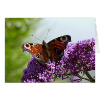 Peacock Butterfly 2 Card