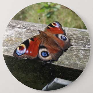 Peacock Butterfly 6 Cm Round Badge