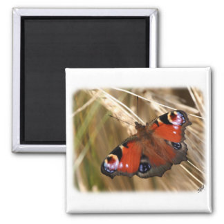 Peacock Butterfly 9Y417D-007 Fridge Magnets